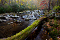 Great Smoky Mountains-7778