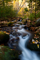 Great Smoky Mountains-7853