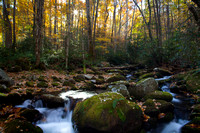 Great Smoky Mountains-7898