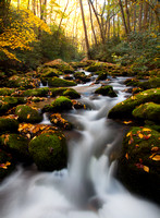 Great Smoky Mountains-7953
