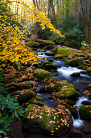 Great Smoky Mountains-7955