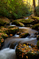 Great Smoky Mountains-7997