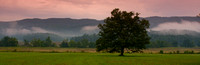 Cades Cove Big Oak
