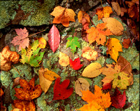 Fall Leaves Mossy Rock 1XH