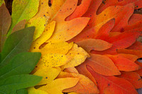 Spectacular Leaf Colors of Fall