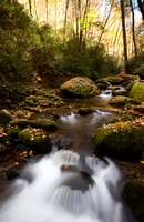 Great Smoky Mountains-7973