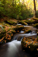 Great Smoky Mountains-7986